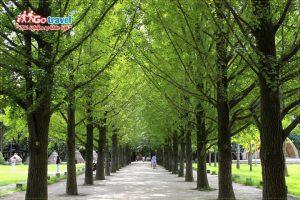Những điểm đến hấp dẫn khi đi tour Hàn Quốc