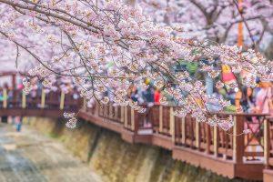 Du lịch Hàn Quốc cần chuẩn bị gì?